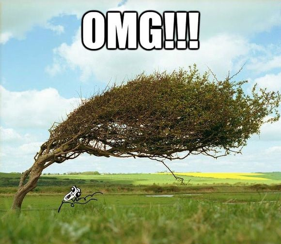 Name:  funny-rage-comic-meme-running-guy-omg-run-tree-pics.jpg