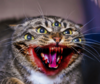 Click image for larger version.  Name:thumb-funny-angry-cat-meme-best-of-2019-59582553.png Views:955 Size:49.5 KB ID:182523