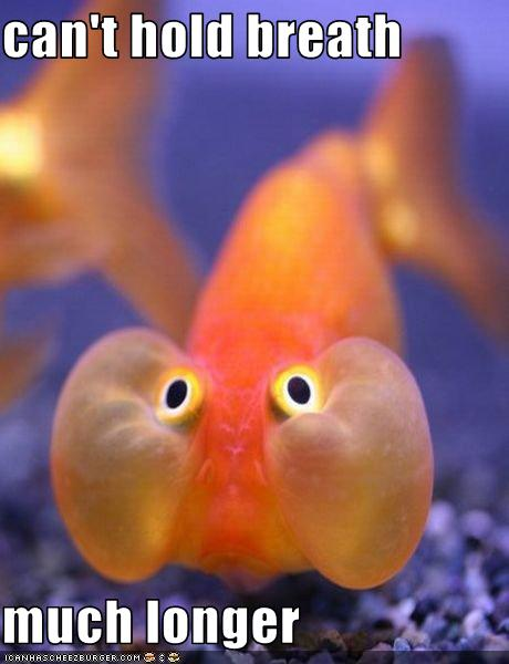 Name:  funny-pictures-this-fish-is-holding-his-breath.jpg Views: 66 Size:  32.2 KB
