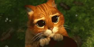 Name:  big eyes.jpg Views: 251 Size:  5.5 KB