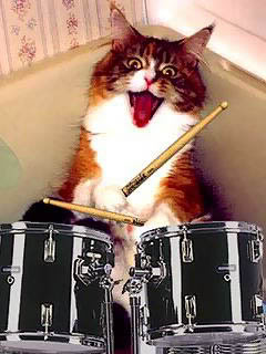 Name:  catDrums.jpg Views: 3844 Size:  21.1 KB
