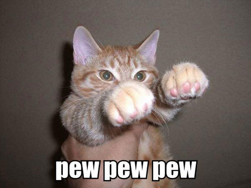 Name:  Funny-Cat-Pictures-cats-935656_500_375.jpg Views: 875 Size:  35.0 KB
