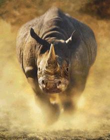 Name:  rhino charge -pic.jpg Views: 637 Size:  9.9 KB