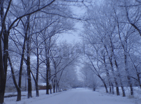 Name:  3545281-41580-frozen-road-between-the-tree-alley-lead-to-nowhere.jpg Views: 885 Size:  95.2 KB